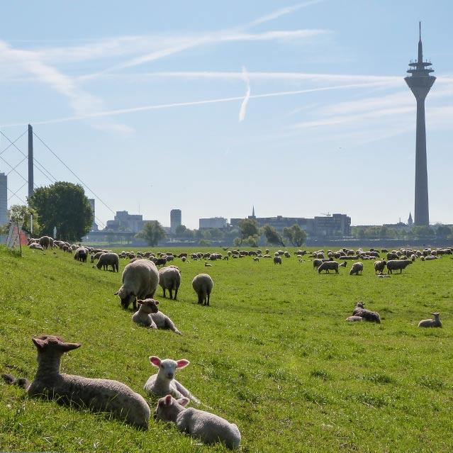 Immobilie verkaufen in Düsseldorf